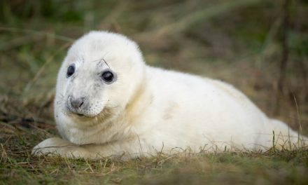 The moment a newborn seal pup was photographed using Sony's Animal Eye autofocus
