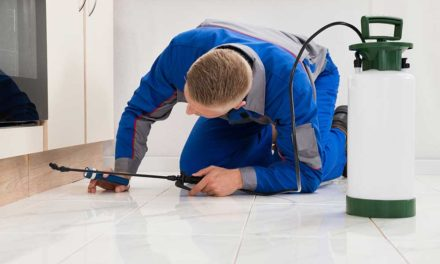 Top Signs You Need to Call an Exterminator
