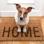 Have a loving pet in your house? Look here for its proper care