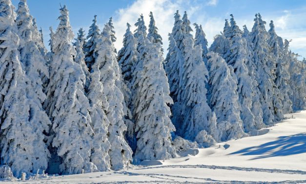 There's Snowplace Like Home: California Tops The List For Winter Movie Settings