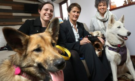 Newcastle Dog & Cat Shelter Fetches RMT Accountants' Advice In Support Of New Facilities Plans