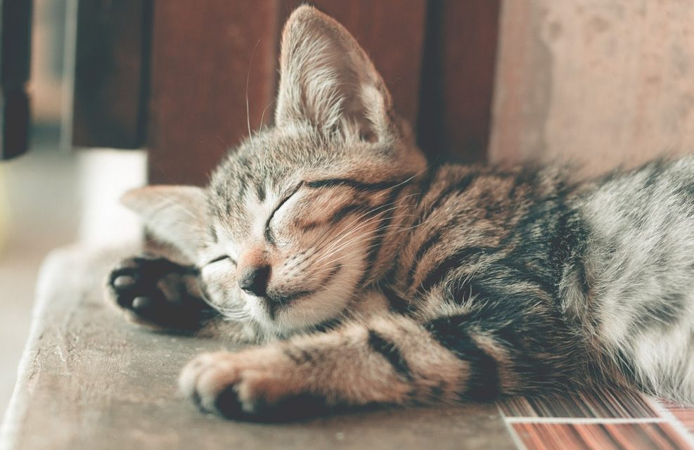 5 Tips To Better Rest