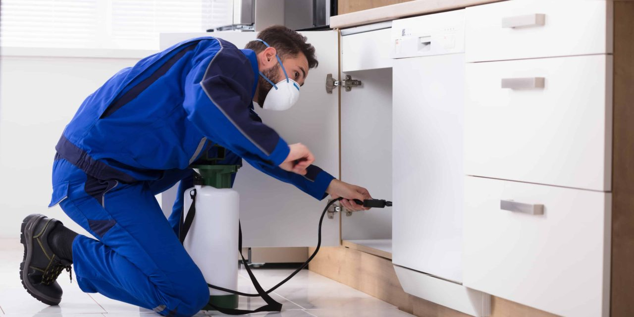 Pest Control Can Be A Serious Issue