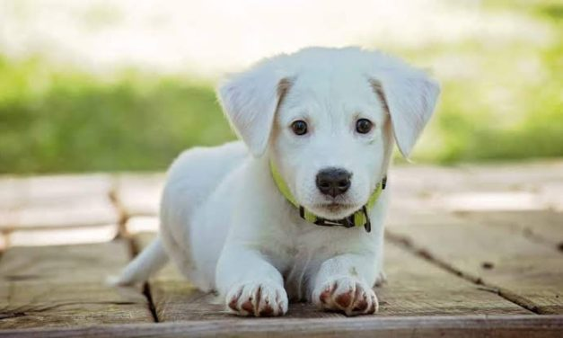Things You Need to Know Before Getting Your First Puppy