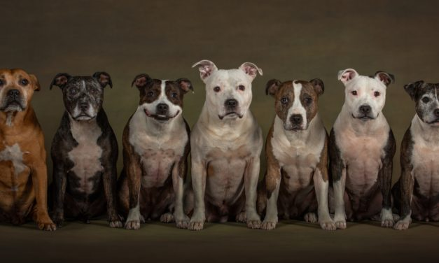 Jason crowned Pet Photographer for second year