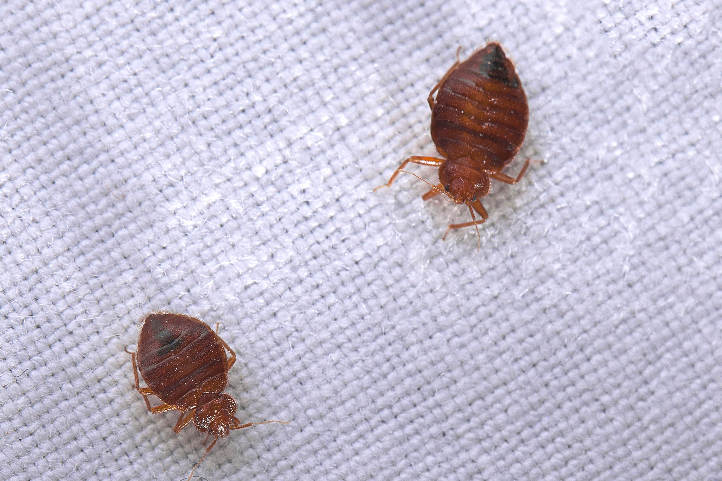 Killing Bed Bugs the Right Way, Right Away!