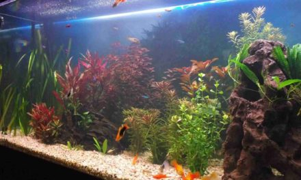 Must A Fish Tank Have A Filter Installed?