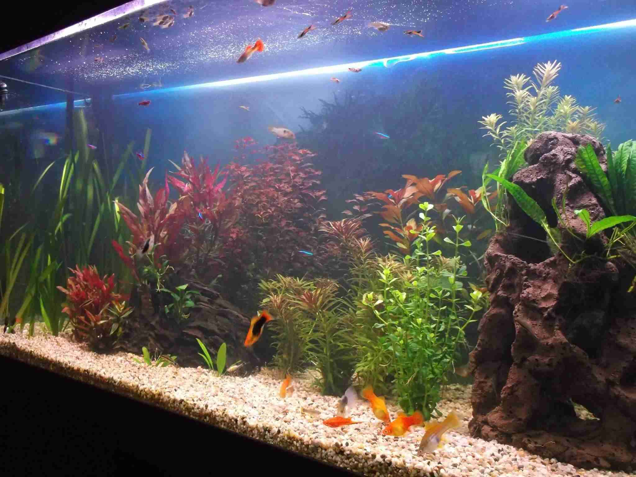 Must A Fish Tank Have A Filter Installed North East Connected