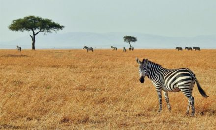 What to look while selecting the perfect Kenya safari holidays?