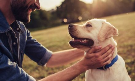 Pet Friendly Rehab – You Are Not Alone To Fight With Drug Addiction