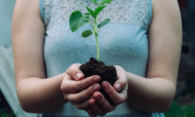 6 Ways Businesses Can Help to Save the Planet This Earth Day