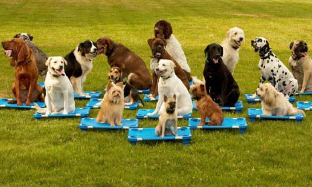 When Should a Puppy Start Training Classes?