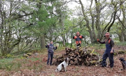 New 'hotels' open in Lake District woodlands