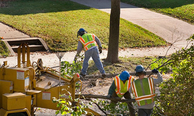 5 Advantages Of Hiring Tree Services