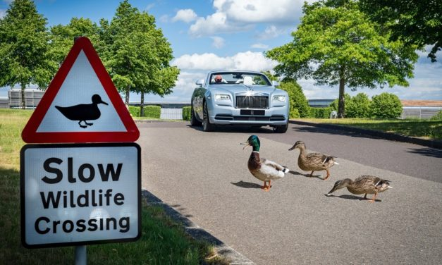 BIRDS, BEES, ROSES AND TREES ALL THRIVING AT THE HOME OF ROLLS-ROYCE