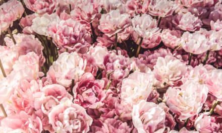 When and Why to Plant Peonies in your Garden