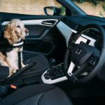 DRIVERS FAVOUR THEIR DOGS JUST AS MUCH AS THEIR CHILDREN WHEN IT COMES TO LETTING THEM SIT UP FRONT