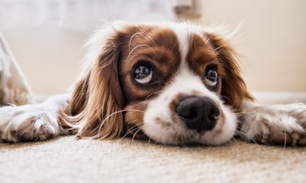 Am I Ready for a Dog? 4 Top Signs Your Ready for a Fur Baby