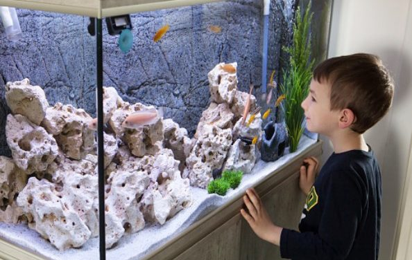 The Positive Effects Of Having An Aquarium In Your Home