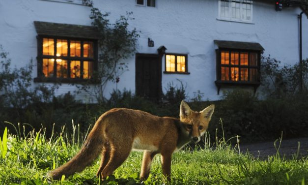 Plea to nature-lovers to 'recycle' winter fuel payments to support wildlife