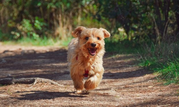 How To Select The Best Dog Walking Coats For Your Loyal Friend?