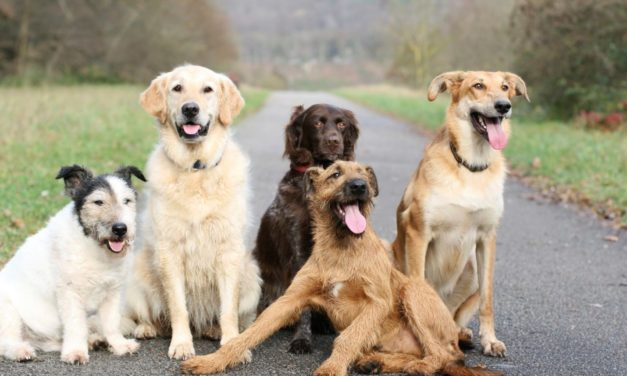 4 Tips For Choosing The Right Dog Breeds For You
