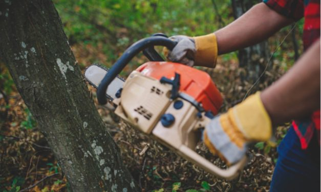 How To Safely Cut Down A Tree Beside Your House