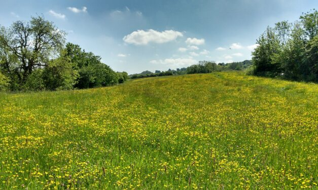 Wildlife trust to create jobs after being awarded major grant for nature project