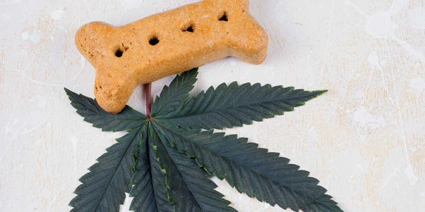 CBD Dog Treats – If You Didn't Know About it Before, Now You Do