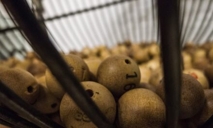 Will Online Bingo Be Able to Continue Attracting Consumers?