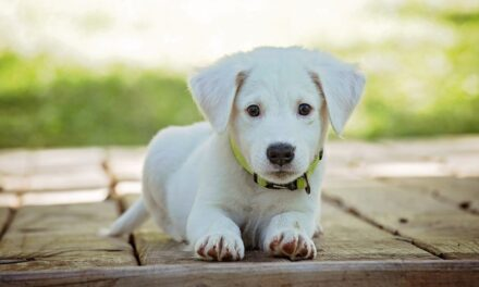 The Latest Online Scam: Fake Puppies!