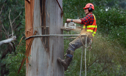 Tree Surgeons In Sheffield: The Basics You Should Know