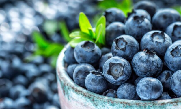 Health Benefits of Handful Blueberries Daily