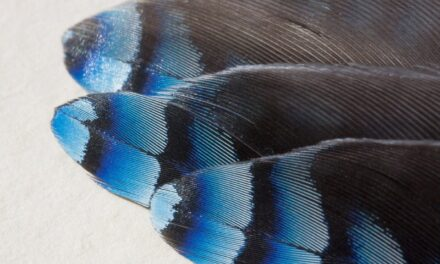 Cleaning and Maintaining Your Feather Flags