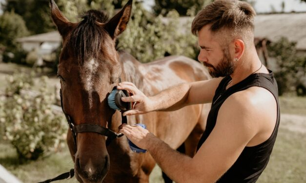 Top Horse Care Tips and Advice