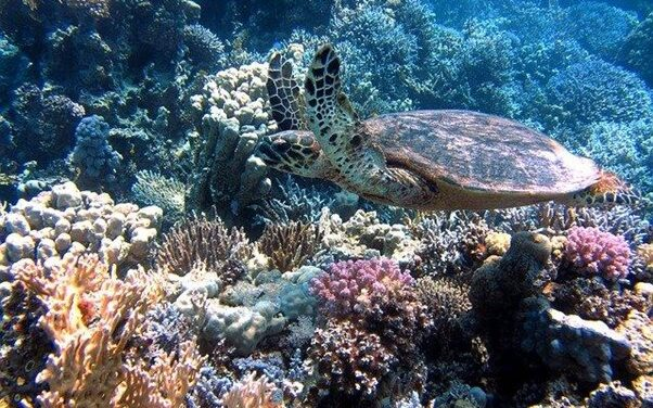 The best diving sites in the Canary Islands