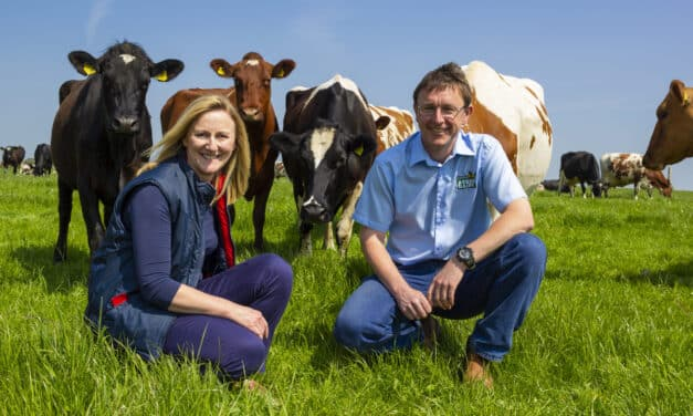 Queen's Award for North East dairy