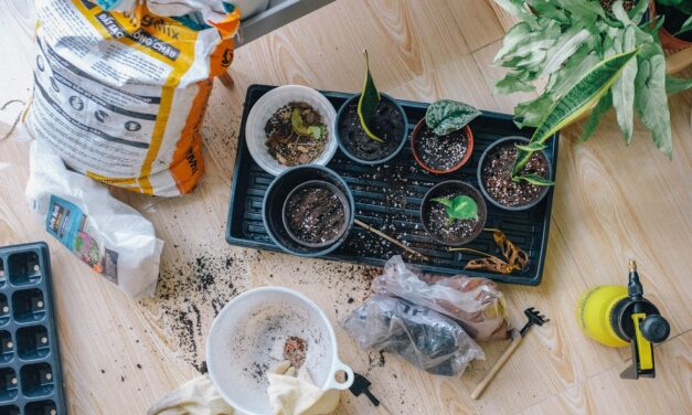 3 Tips for Those Learning to Garden