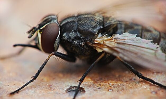 Britain's Pest Nightmare: Don't Let It Fly Over Your Head