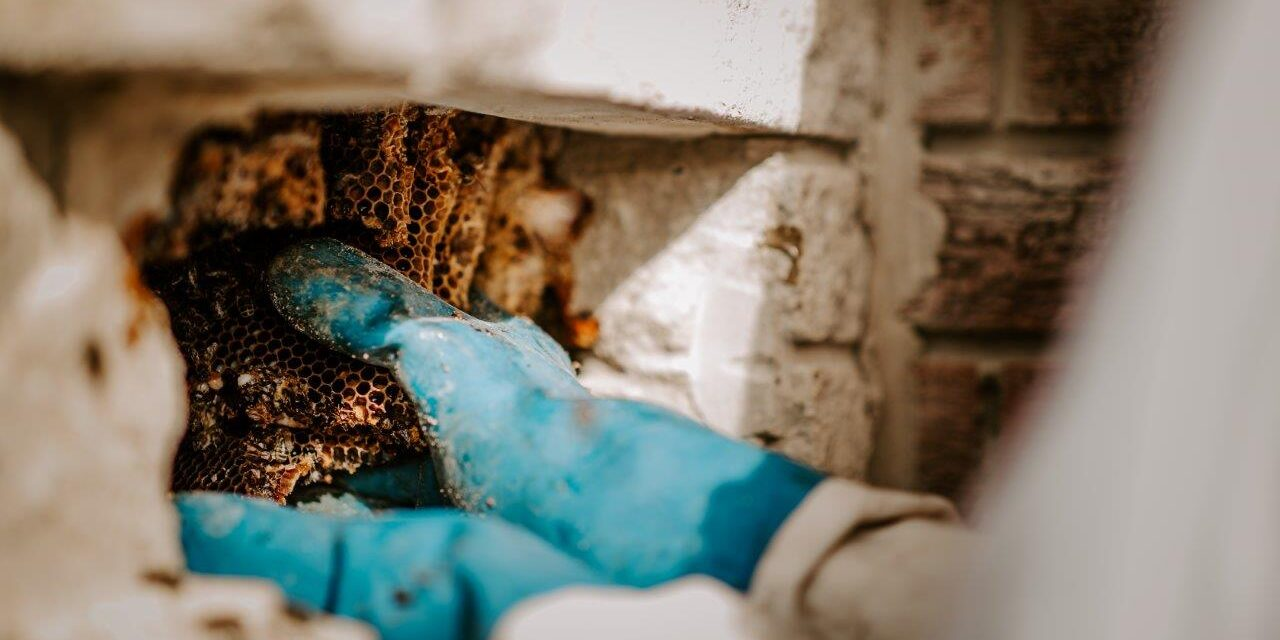 The business that bee-lieves in saving our pollinators