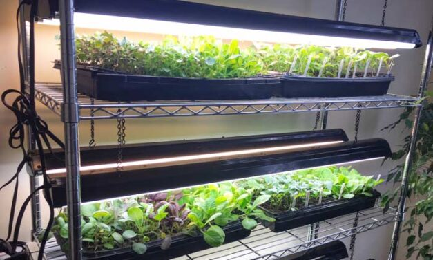 Tips When Buying Grow Lights For Your Plants