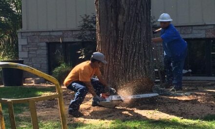 Different Circumstances When Tree Removal Becomes Necessary