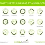 What is an ecology consultancy and why you might need one when developing a property