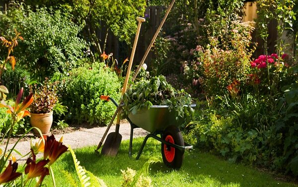 Professional Tips on How to Maintain Your Garden