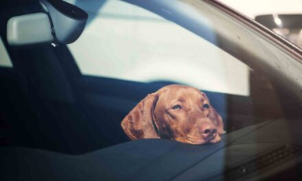 Make sure there are no 'hot dogs' in your car, says GEM Motoring Assist