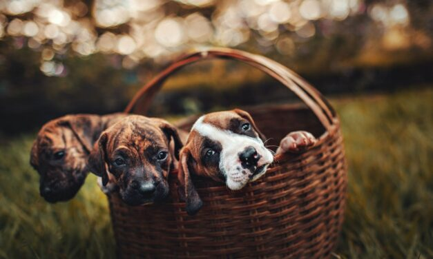 Pets: The Comforting Lifesavers of COVID-19