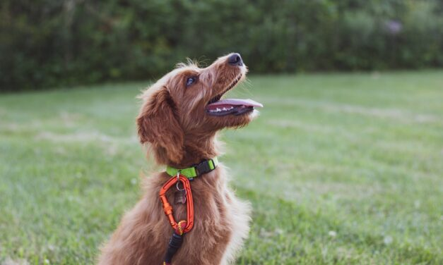 10 Ways to Keep Your Dog Healthy and Happy
