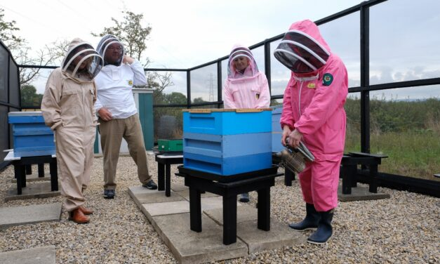 Bee Colonies Flying Into Darlington Wind Farm Site To Boost Local Environment