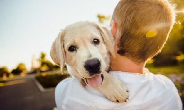 Thinking About Getting A Puppy? Here's Some Important Advice