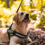 How Service Dogs Perform Tasks to Make Daily Life Easier